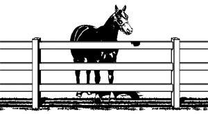 Horse Vinyl Fencing